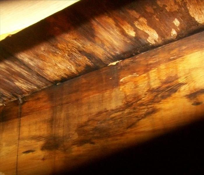 Local home with mold in floor joists. After